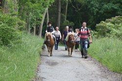 Castlewellan Forest ride & bbq
